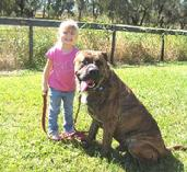 At Euro Pros K-9 Center, we work with young children too!